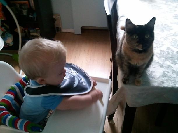 Cat, bebe.